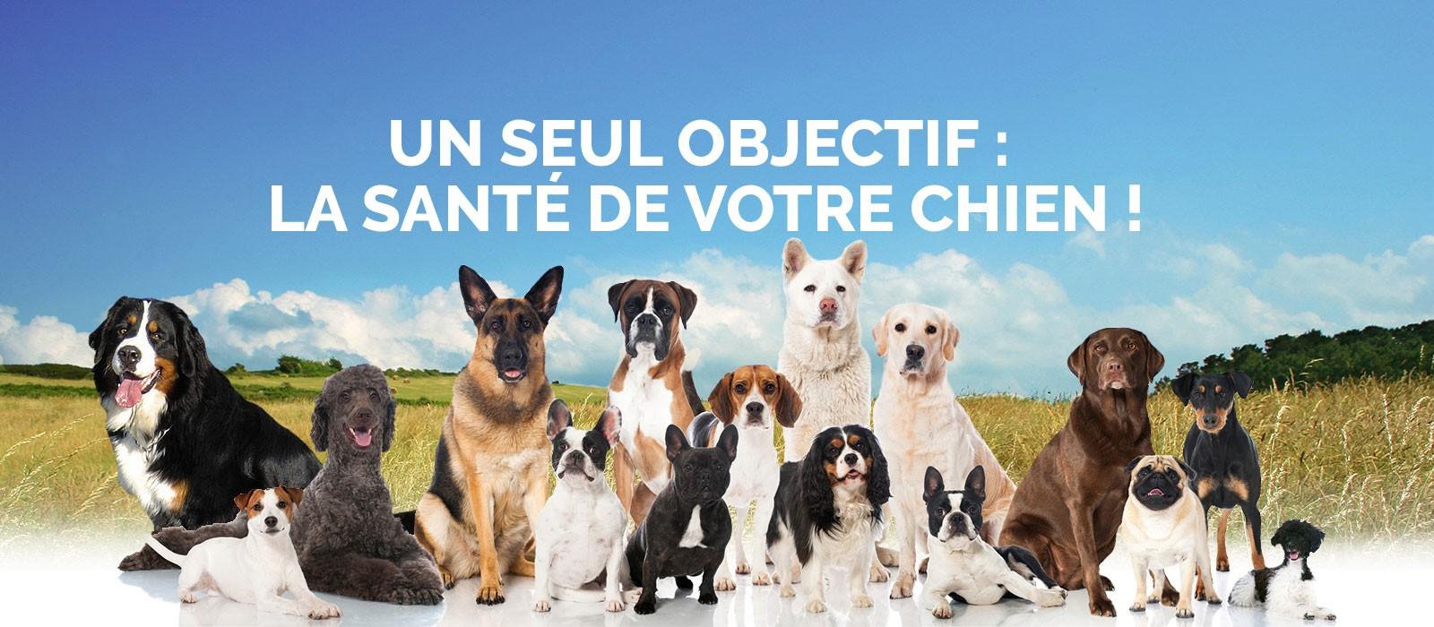 Des matieres premieres de qualité pour la santé de votre chien